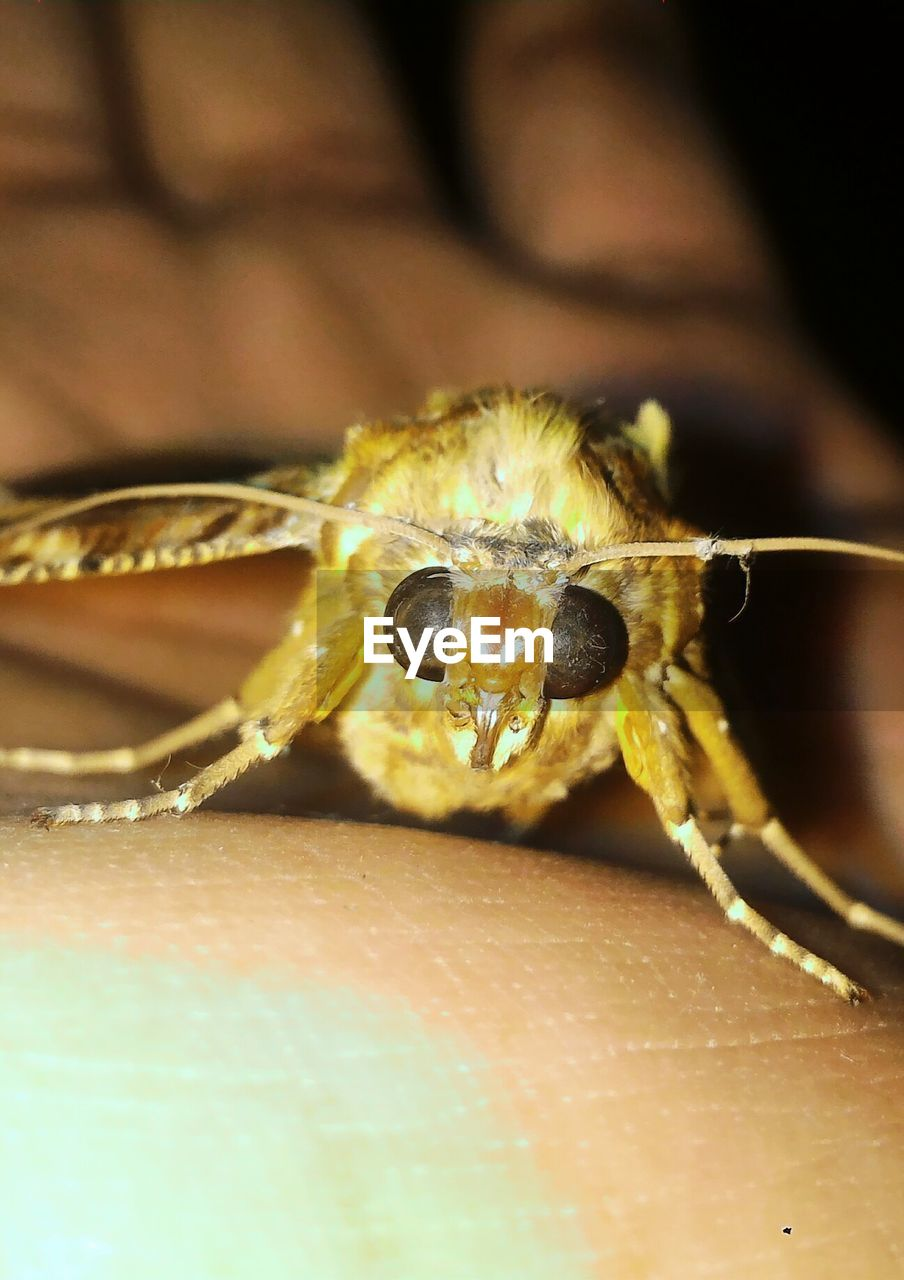 one animal, animal themes, animals in the wild, close-up, animal wildlife, insect, spider, no people, indoors, nature, night