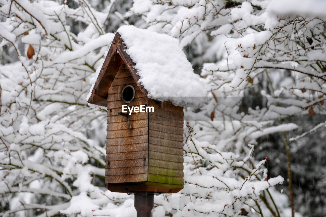 snow, winter, cold temperature, birdhouse, focus on foreground, white color, tree, nature, wood - material, day, no people, frozen, covering, built structure, plant, architecture, close-up, branch, beauty in nature, outdoors