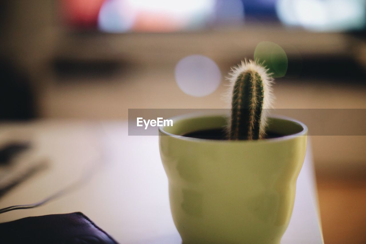focus on foreground, close-up, indoors, green color, no people, growth, freshness, day, nature