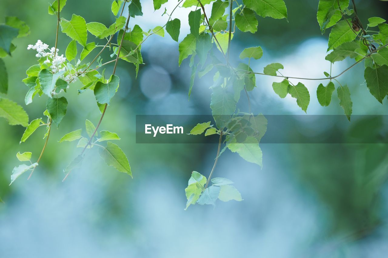 leaf, growth, plant, green color, nature, day, beauty in nature, outdoors, no people, freshness, close-up