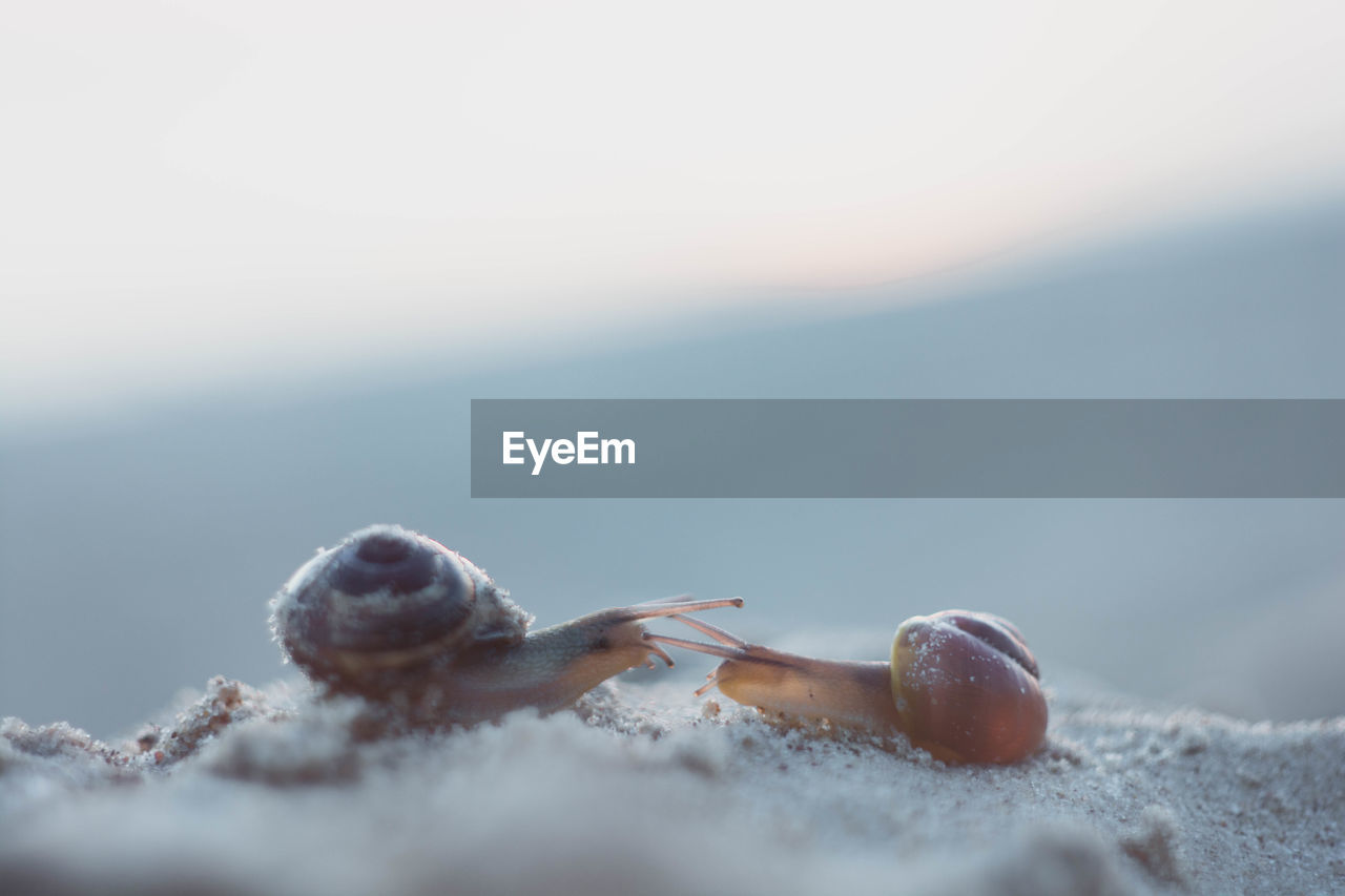 Close-Up Of Snails On Sand At Beach