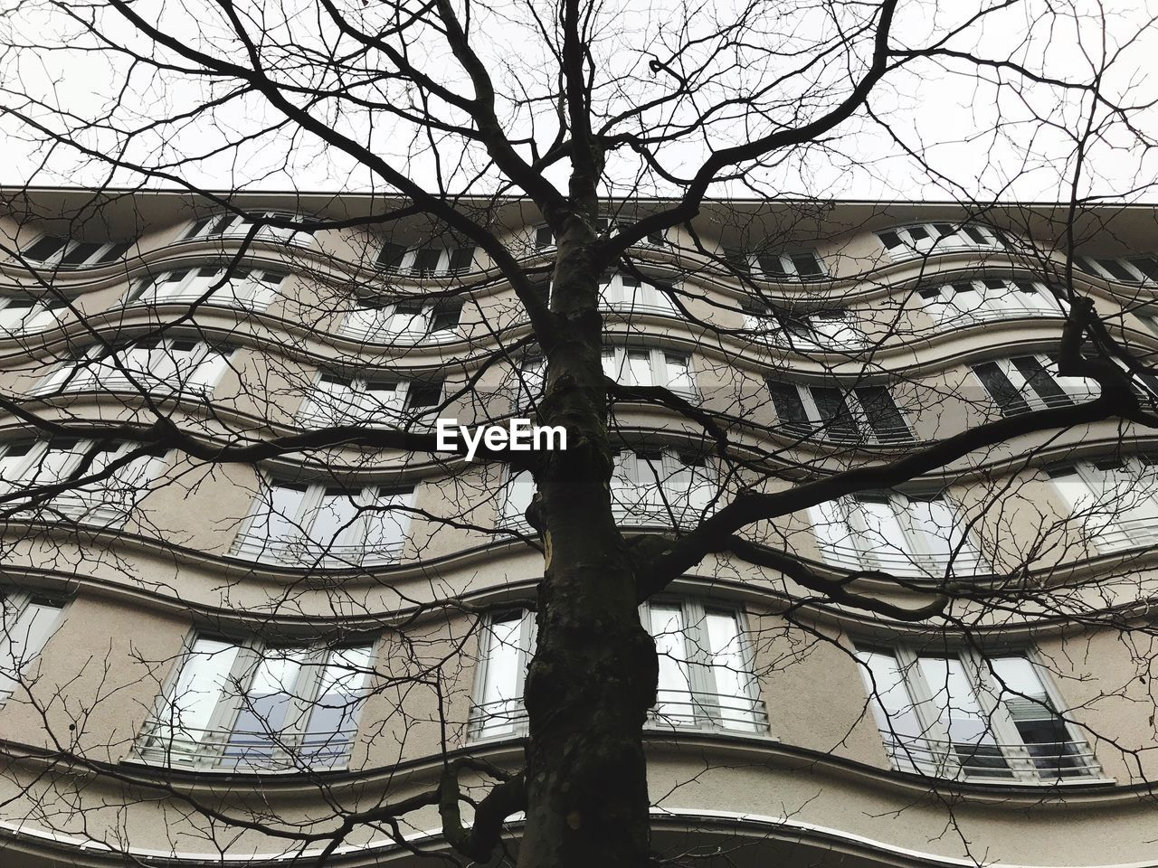 bare tree, tree, architecture, branch, low angle view, built structure, building exterior, no people, day, sky, outdoors