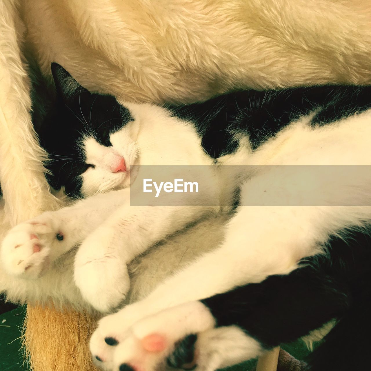 domestic animals, animal themes, pets, mammal, one animal, domestic cat, no people, indoors, close-up, feline, relaxation, dog, day
