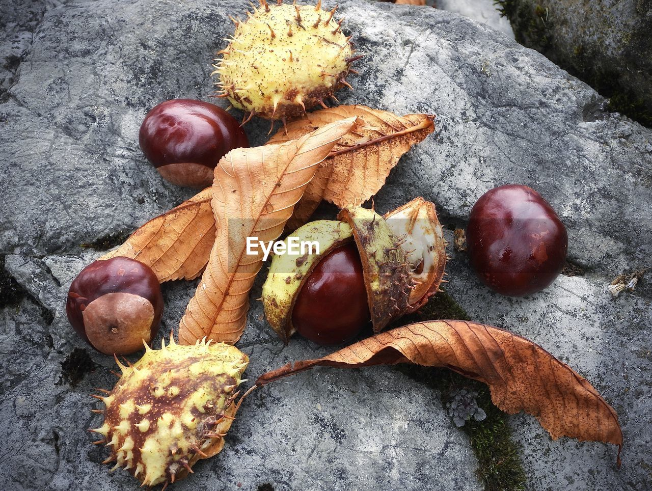 food and drink, food, still life, healthy eating, nut, freshness, nut - food, no people, wellbeing, close-up, high angle view, fruit, chestnut, dry, chestnut - food, plant part, leaf, table, day, nature, leaves, natural condition