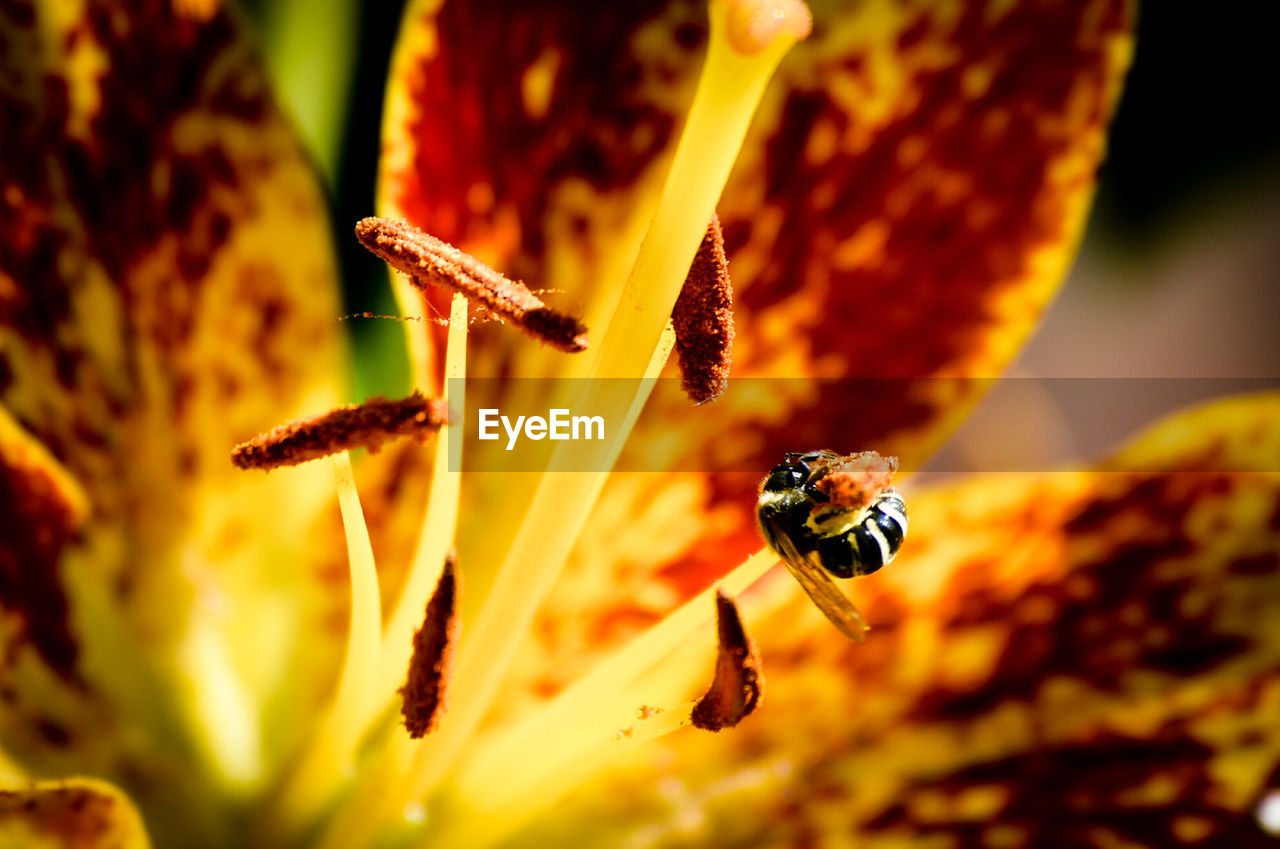insect, animals in the wild, close-up, animal wildlife, invertebrate, animal, beauty in nature, animal themes, plant, selective focus, nature, flower, no people, day, growth, flowering plant, fragility, orange color, one animal, vulnerability, outdoors, flower head, pollen, pollination