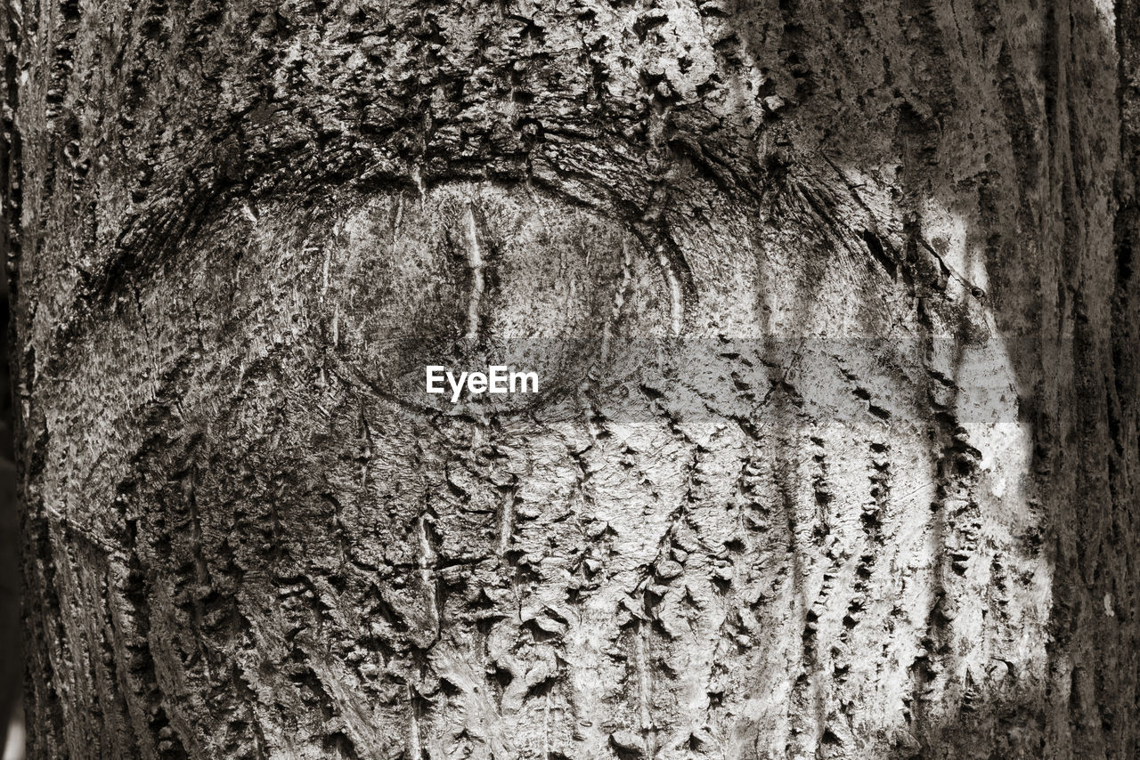 textured, tree trunk, rough, close-up, wood - material, no people, full frame, bark, tree, day, backgrounds, outdoors, nature
