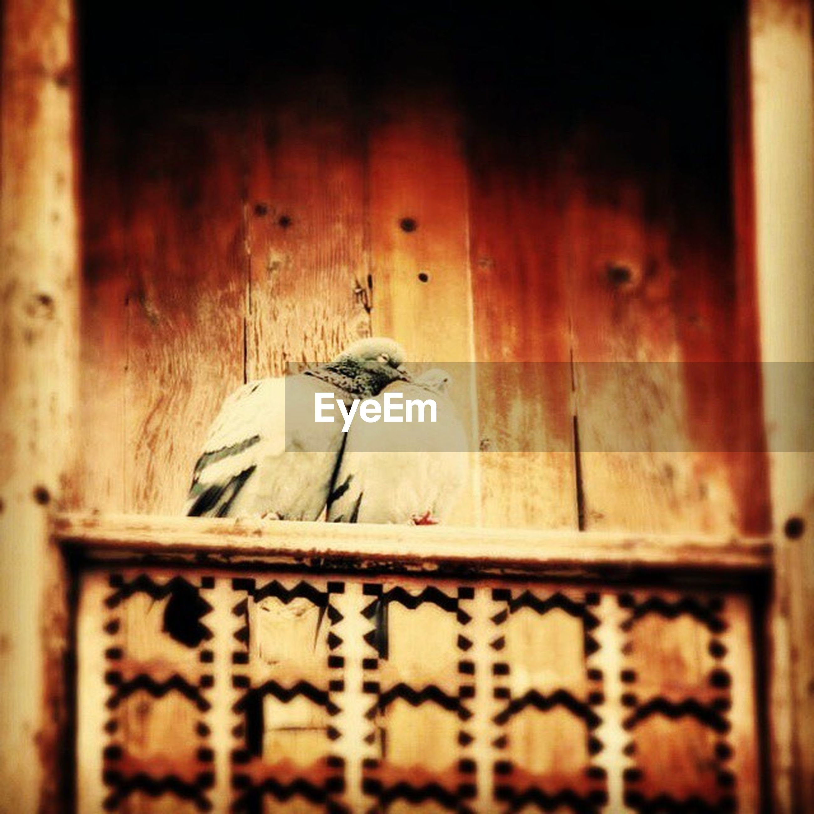 animal themes, one animal, wood - material, wildlife, animals in the wild, built structure, wooden, door, architecture, bird, indoors, day, no people, animal representation, mammal, two animals, wall - building feature, close-up, building exterior