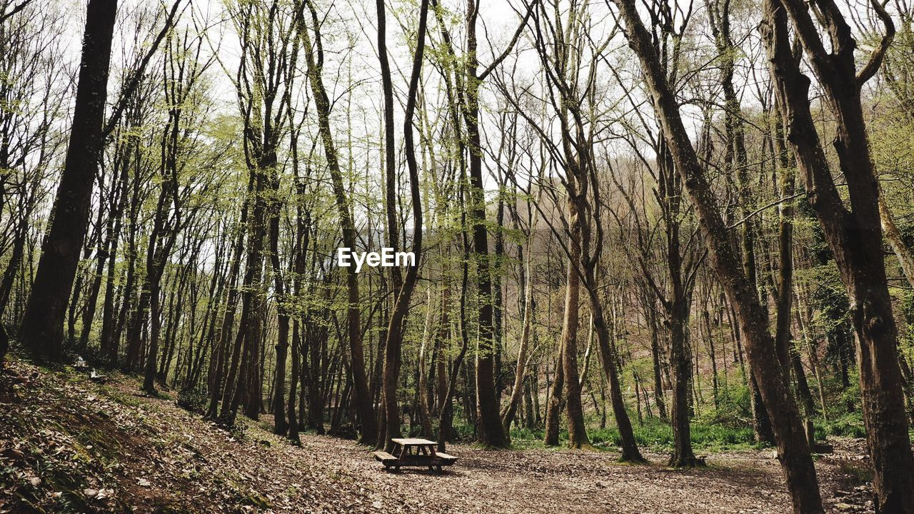 Panoramic Shot Of Trees In Forest