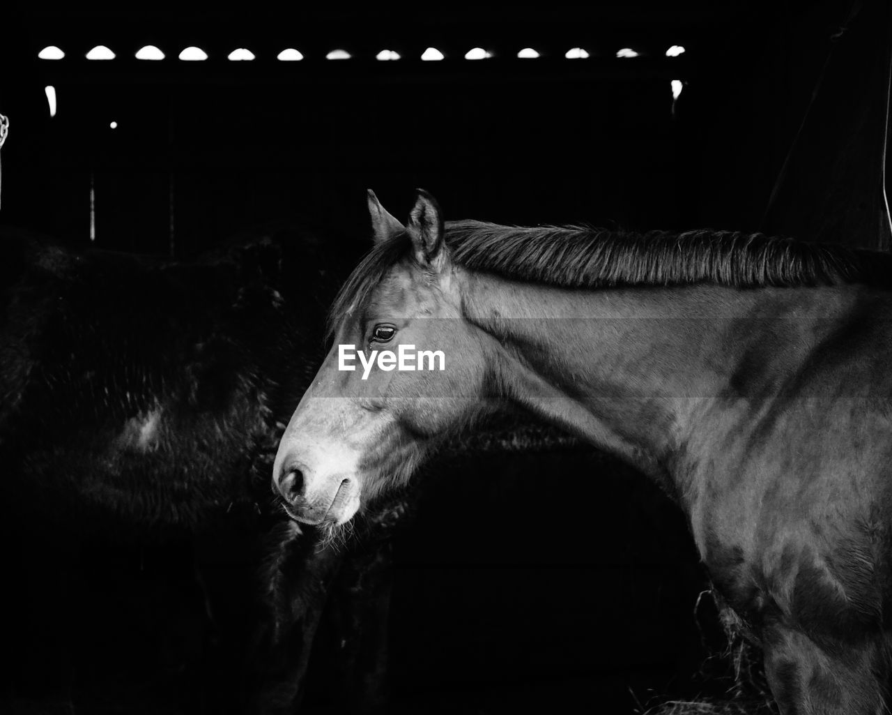 Side View Of Horse Standing In Stable