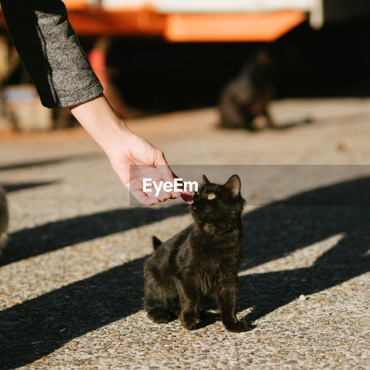 Cropped Image Of Woman With Black Stray Kitten On Footpath