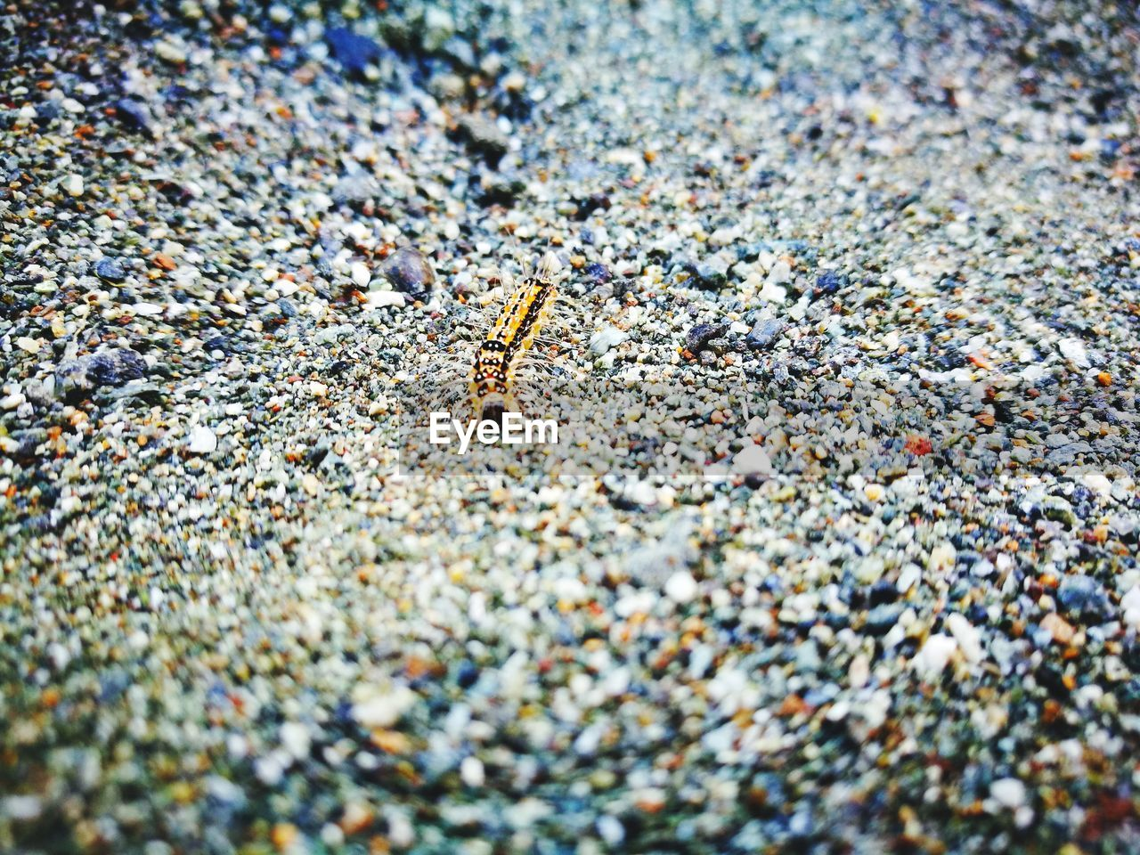 insect, animal themes, animals in the wild, selective focus, day, beach, one animal, no people, sand, outdoors, animal wildlife, close-up, nature, bee, colony