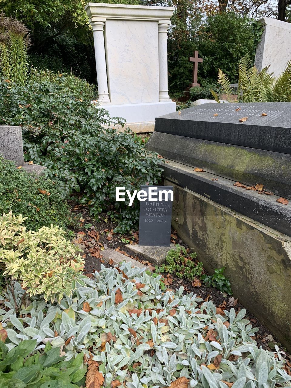 plant, leaf, architecture, built structure, cemetery, day, grave, plant part, nature, tombstone, stone, no people, outdoors, building exterior, communication, autumn, memorial, sadness, text