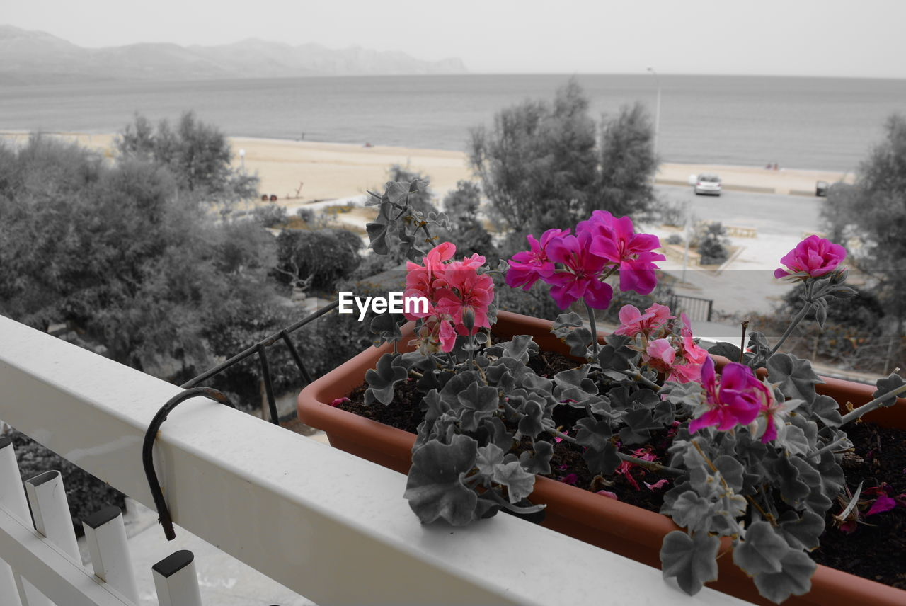 flower, nature, railing, plant, water, beauty in nature, sea, growth, no people, day, outdoors, sky, tree, close-up, freshness