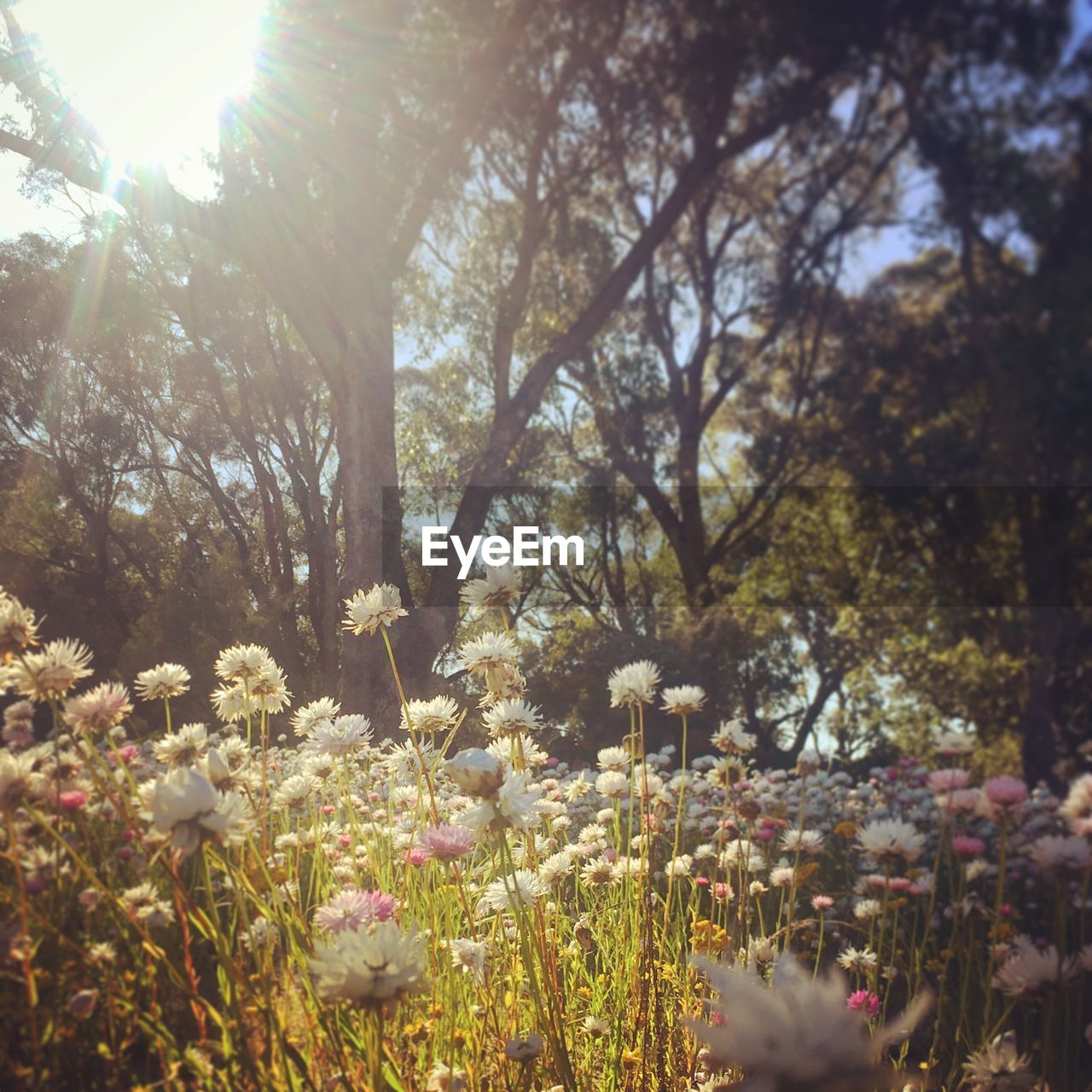 nature, growth, tree, tranquility, sunlight, beauty in nature, flower, outdoors, no people, day, plant, scenery, freshness, sky