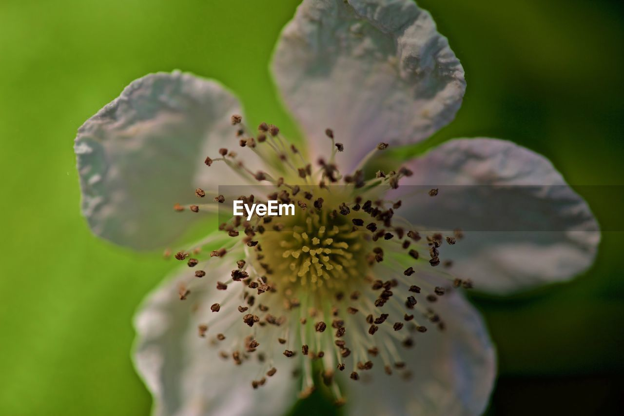 flower, beauty in nature, nature, fragility, freshness, growth, petal, flower head, selective focus, stamen, close-up, blossom, day, no people, outdoors, plant