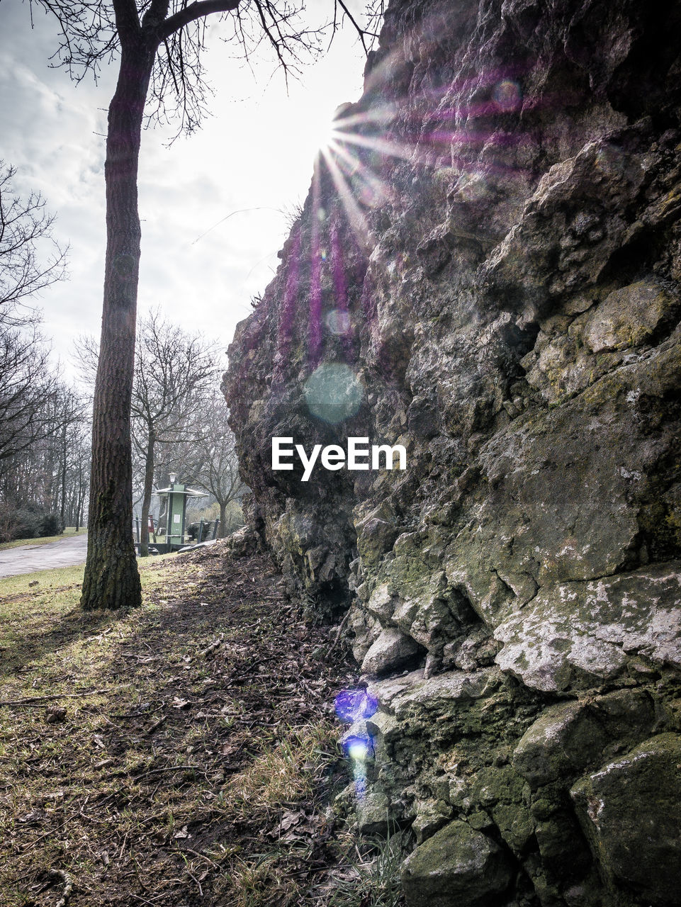 plant, tree, nature, land, beauty in nature, day, rock, tree trunk, solid, rock - object, outdoors, trunk, growth, forest, scenics - nature, real people, sky, environment, non-urban scene, rock formation, lens flare, purple