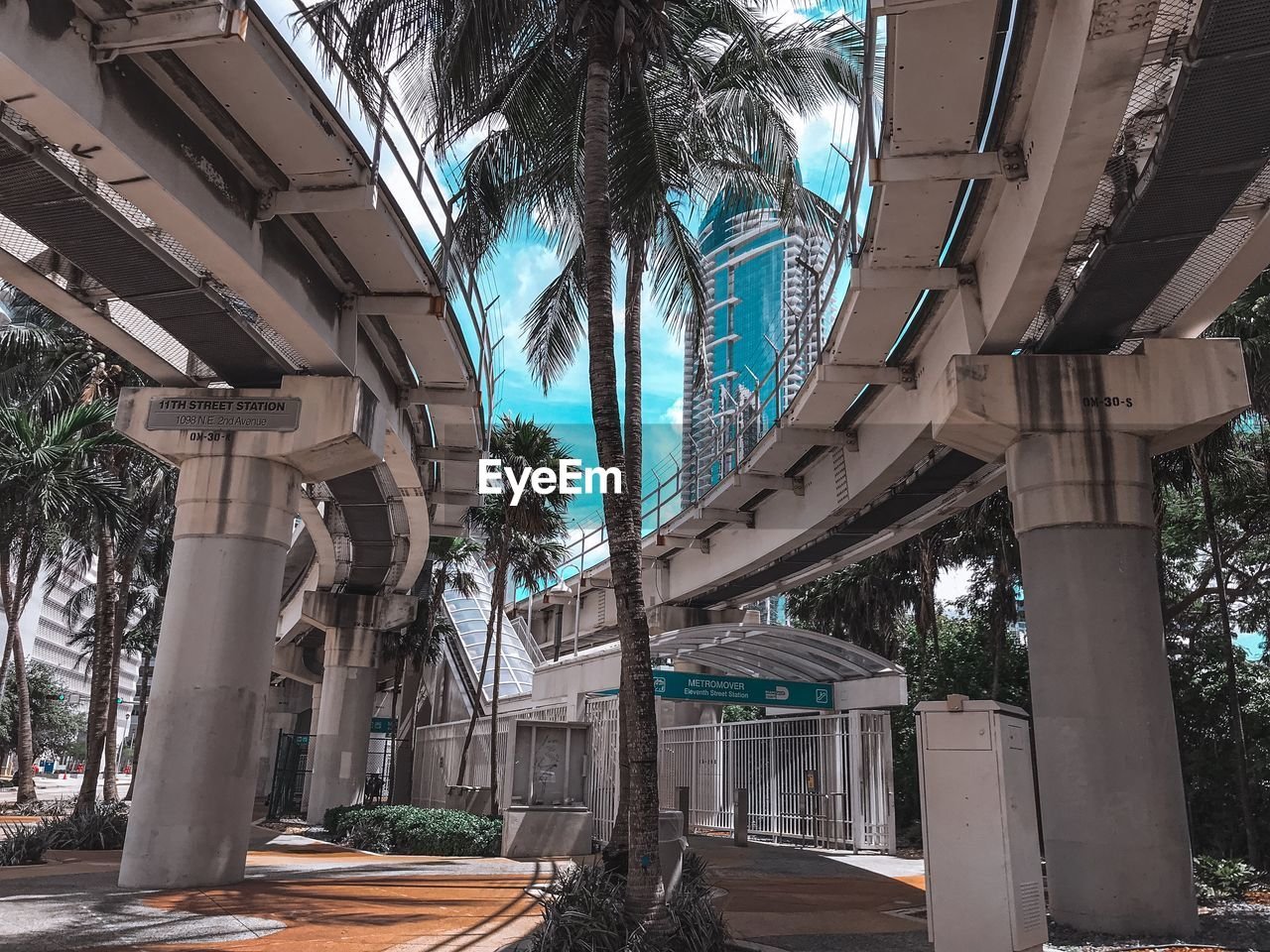 Low angle view of palm trees and buildings in city