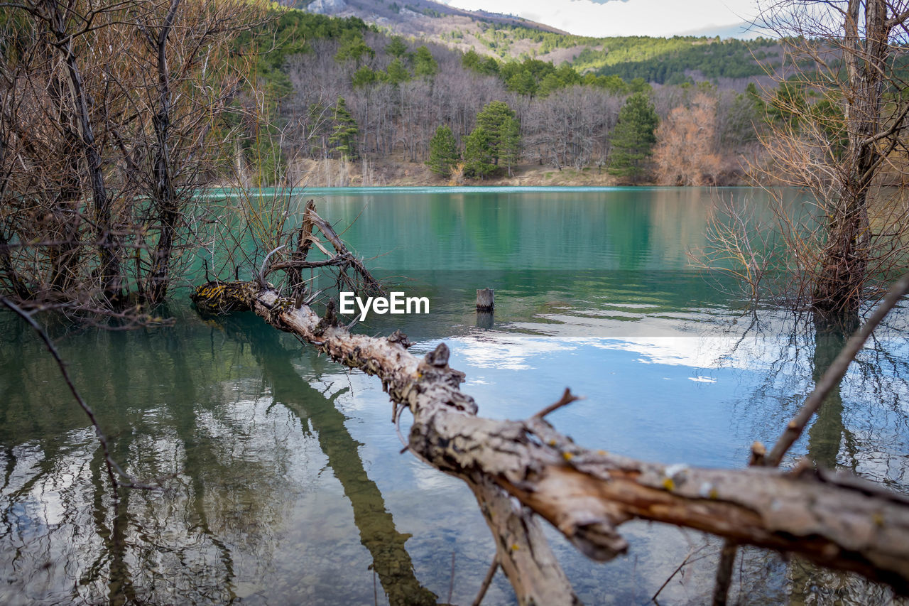 water, tree, lake, tranquility, reflection, plant, beauty in nature, tranquil scene, nature, day, scenics - nature, non-urban scene, no people, forest, driftwood, mountain, trunk, fallen tree, outdoors, dead plant