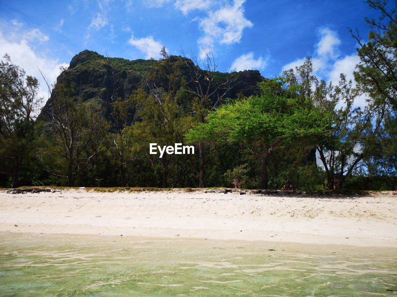 plant, tree, sky, land, beauty in nature, tranquil scene, tranquility, scenics - nature, nature, cloud - sky, day, beach, water, mountain, growth, non-urban scene, sand, outdoors, no people