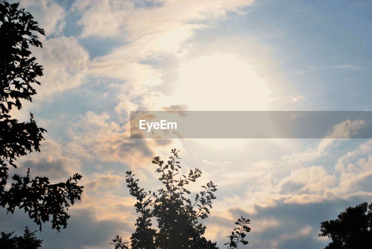 sky, cloud - sky, tree, beauty in nature, low angle view, plant, tranquility, scenics - nature, nature, no people, tranquil scene, silhouette, sunset, outdoors, growth, day, idyllic, sunlight, non-urban scene, treetop, height