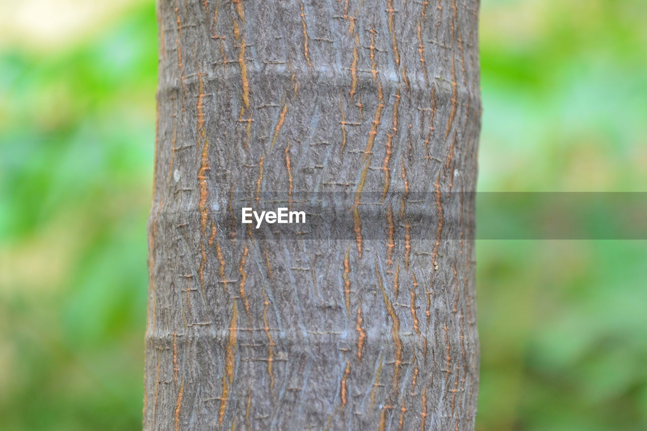 tree, focus on foreground, tree trunk, trunk, plant, close-up, day, no people, textured, nature, outdoors, forest, land, growth, rough, tranquility, beauty in nature, wood - material, natural pattern, pattern, bark