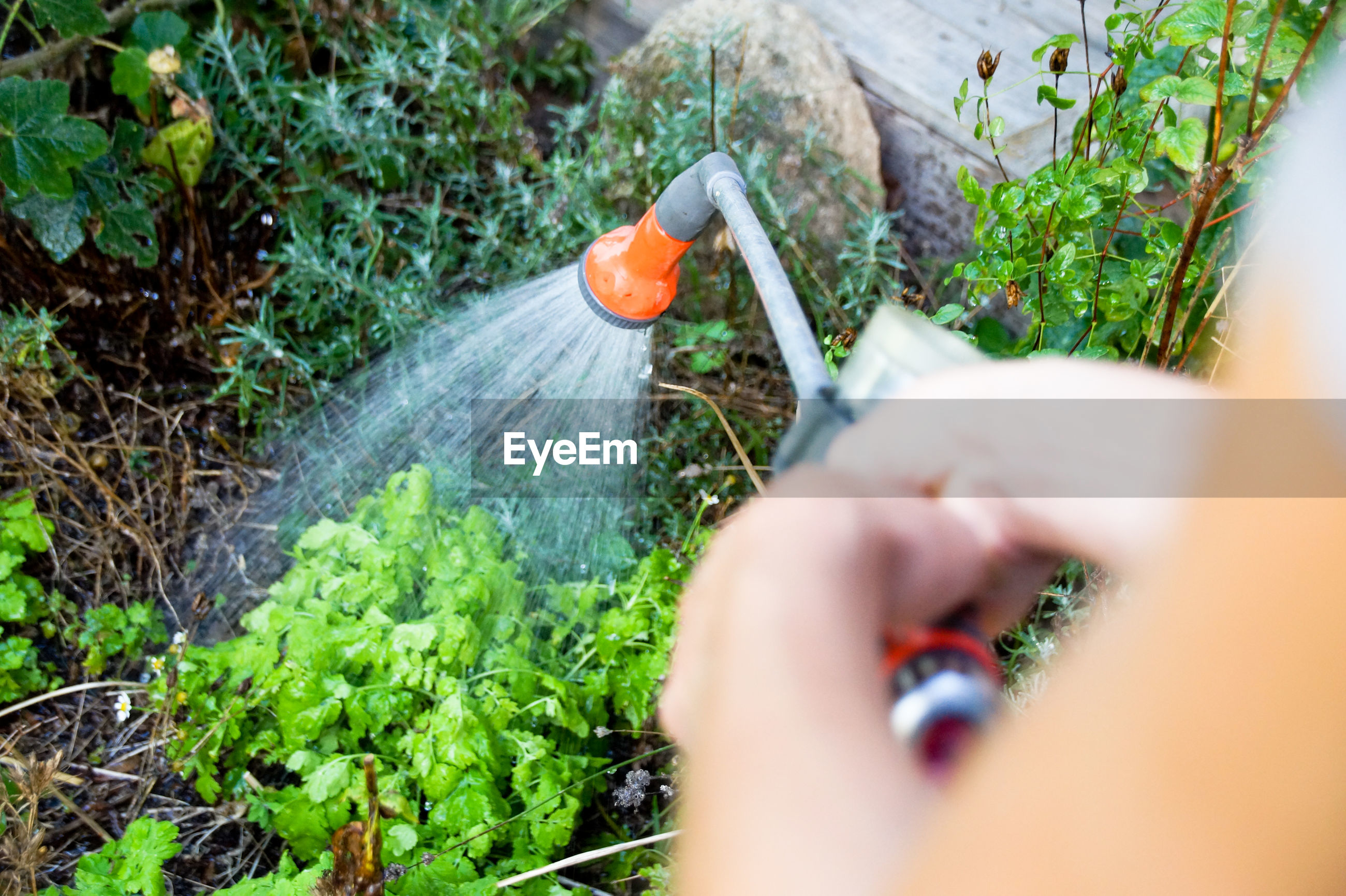 Cropped image of woman spraying water on plants
