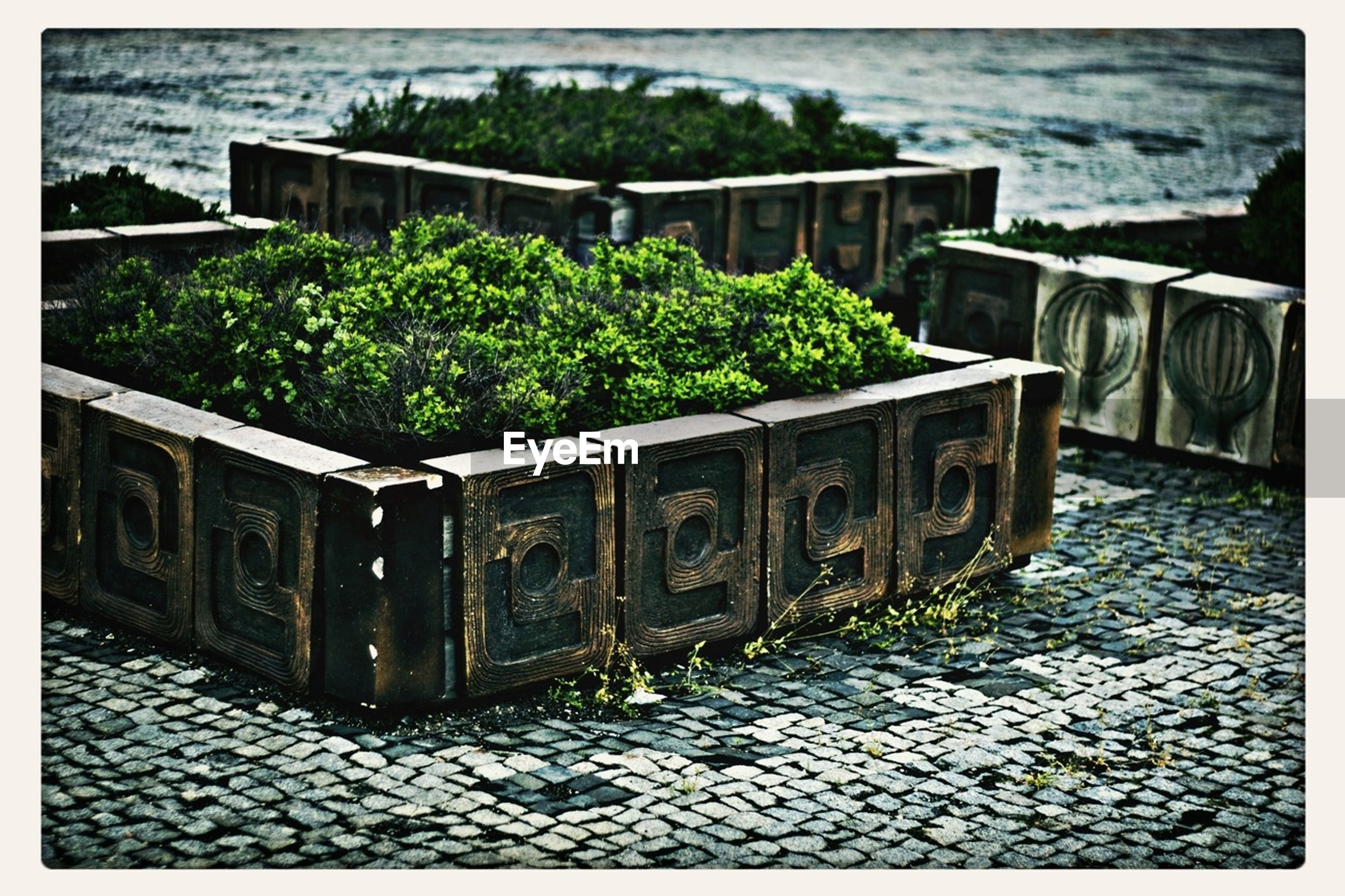 Plants growing decorative container on cobbled street