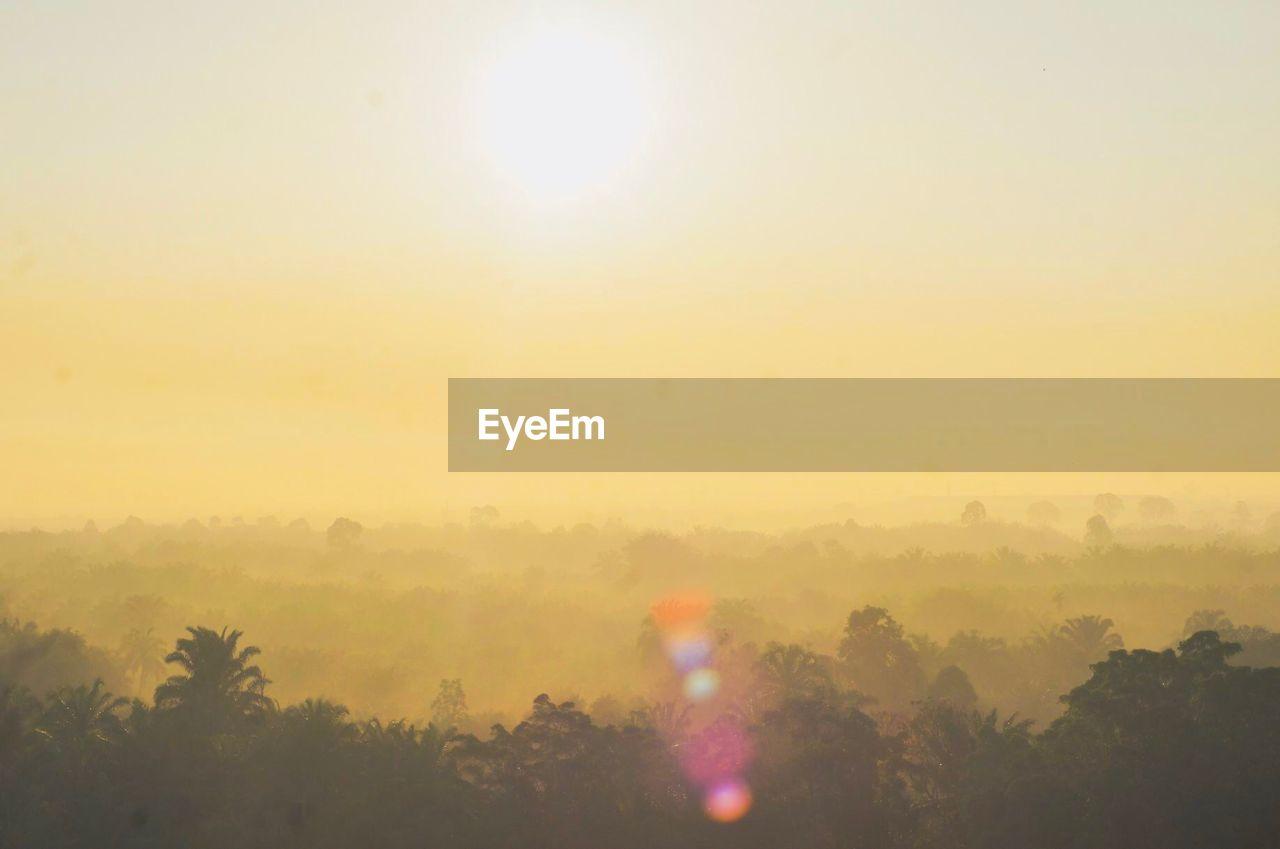 sky, tree, sun, plant, beauty in nature, sunset, tranquility, nature, scenics - nature, tranquil scene, fog, environment, sunlight, no people, outdoors, idyllic, lens flare, growth, non-urban scene, hazy