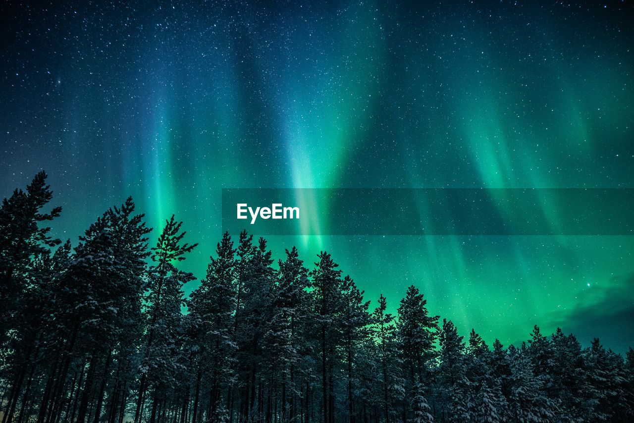 tree, beauty in nature, plant, scenics - nature, night, space, astronomy, low angle view, tranquility, green color, no people, sky, star - space, tranquil scene, nature, idyllic, growth, aurora polaris, forest, non-urban scene, space and astronomy