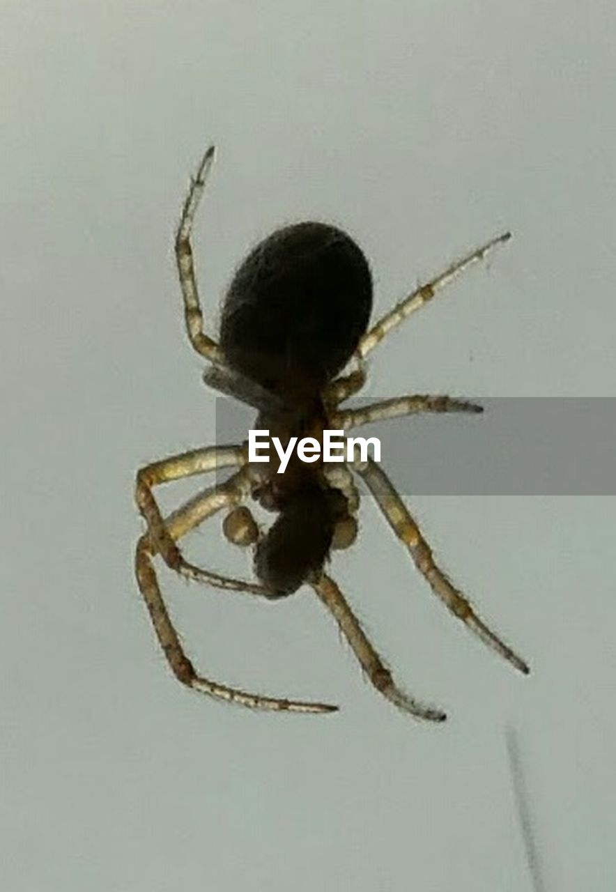 one animal, spider, animal wildlife, animal themes, animal leg, animals in the wild, no people, close-up, nature, outdoors, day