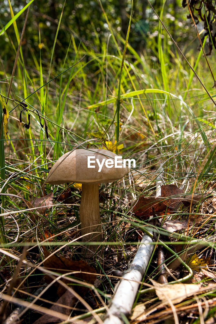 mushroom, fungus, vegetable, plant, growth, food, land, toadstool, grass, nature, field, beauty in nature, close-up, day, no people, forest, food and drink, focus on foreground, green color, edible mushroom, outdoors, wild, poisonous