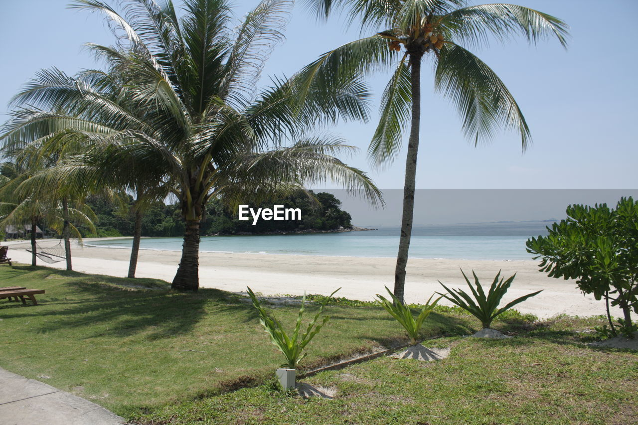 tropical climate, tree, plant, palm tree, water, growth, sky, beauty in nature, scenics - nature, tranquility, nature, sea, tranquil scene, beach, land, green color, horizon over water, trunk, tree trunk, no people, coconut palm tree, outdoors, tropical tree, palm leaf