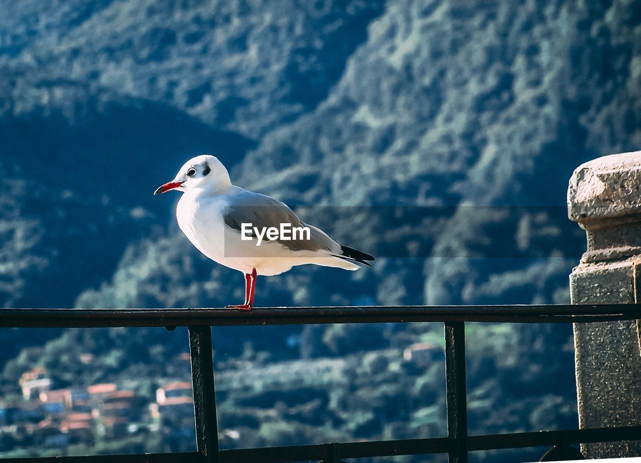 bird, vertebrate, animal themes, animal, animals in the wild, animal wildlife, perching, one animal, seagull, railing, focus on foreground, day, no people, nature, side view, outdoors, close-up, sea, beauty in nature, full length
