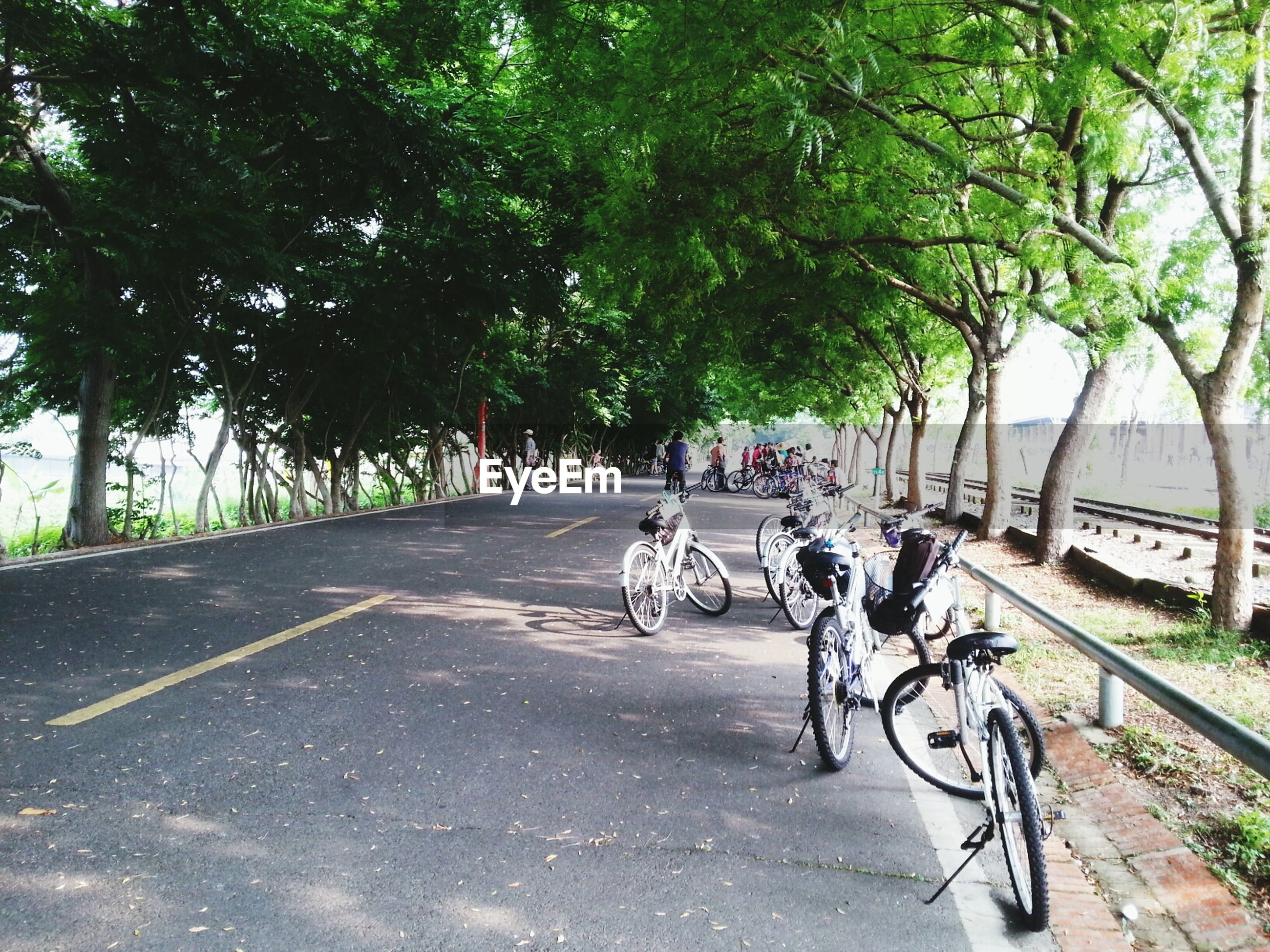 transportation, bicycle, tree, land vehicle, mode of transport, the way forward, road, street, riding, diminishing perspective, stationary, parked, parking, sunlight, shadow, cycling, vanishing point, footpath, on the move, car