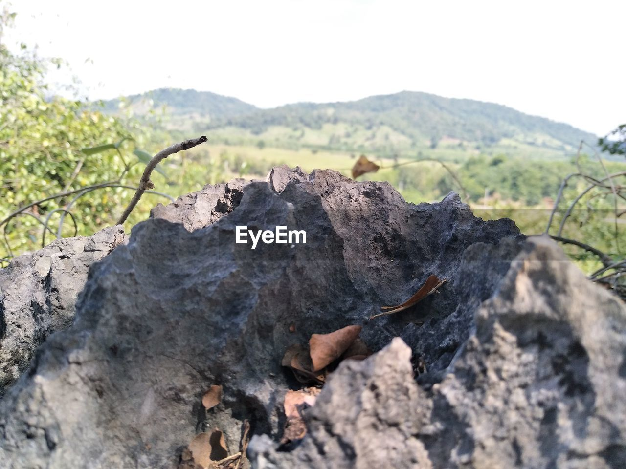 nature, rock, tree, no people, mountain, rock - object, solid, tranquility, plant, sky, focus on foreground, beauty in nature, land, day, close-up, outdoors, scenics - nature, non-urban scene, tranquil scene, sunlight