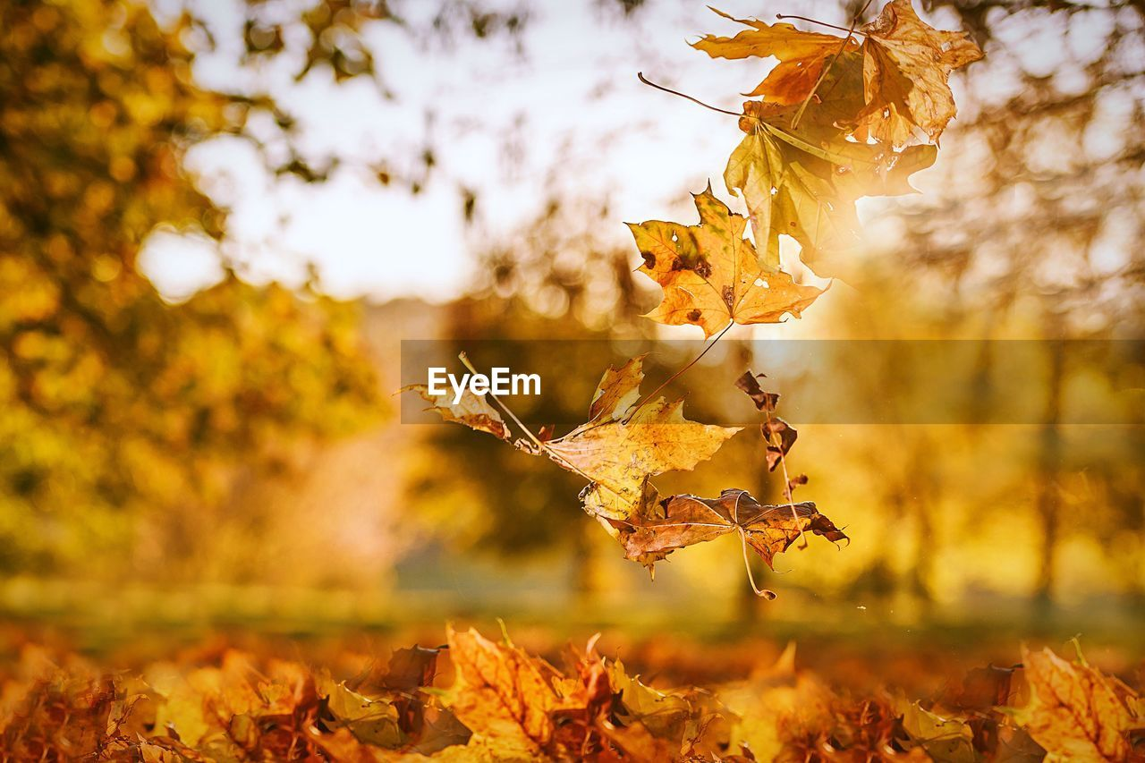 autumn, leaf, change, nature, dry, focus on foreground, outdoors, no people, day, tree, sunlight, close-up, beauty in nature, field, fragility, sky