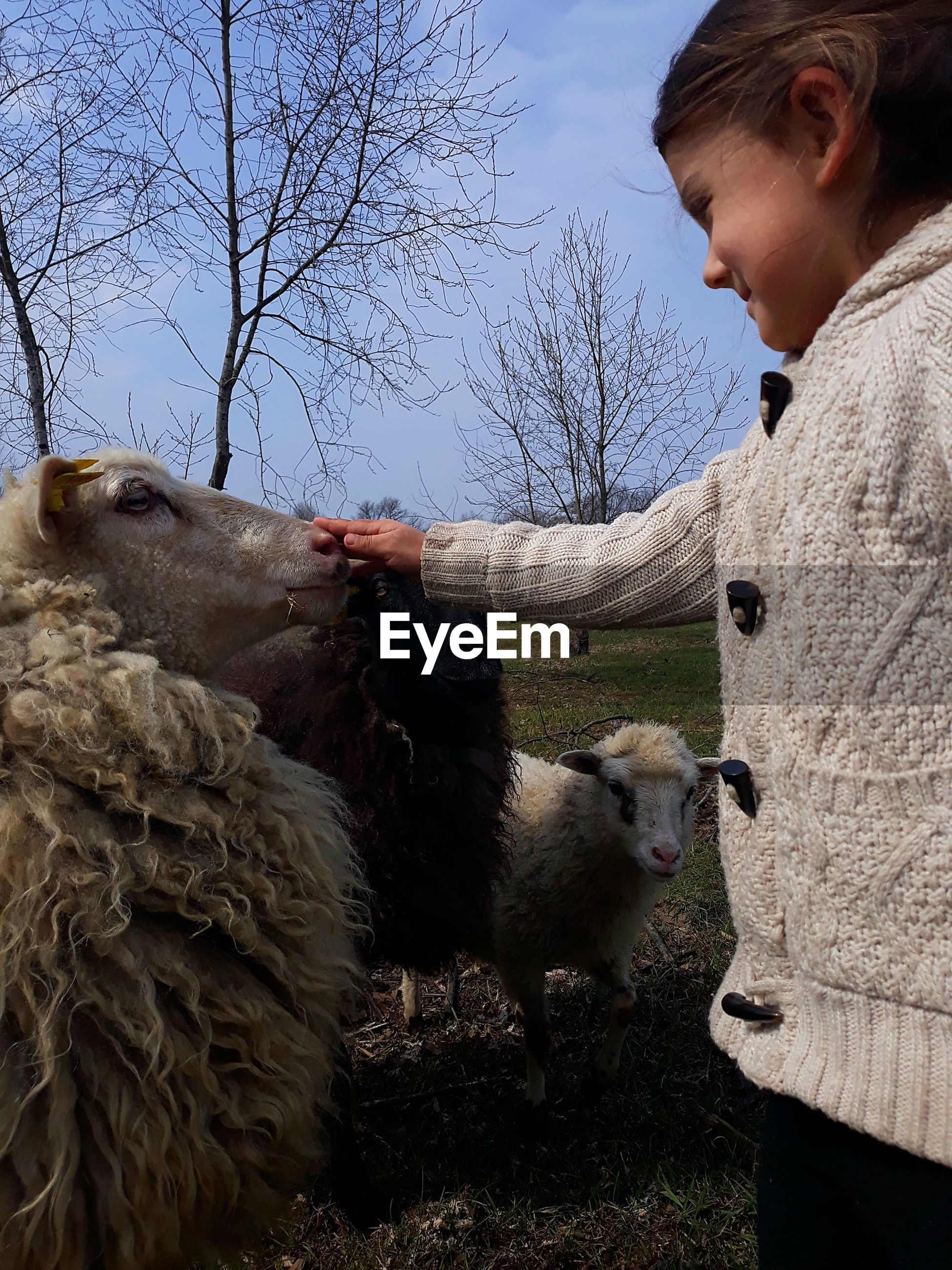 Woman touching sheep field
