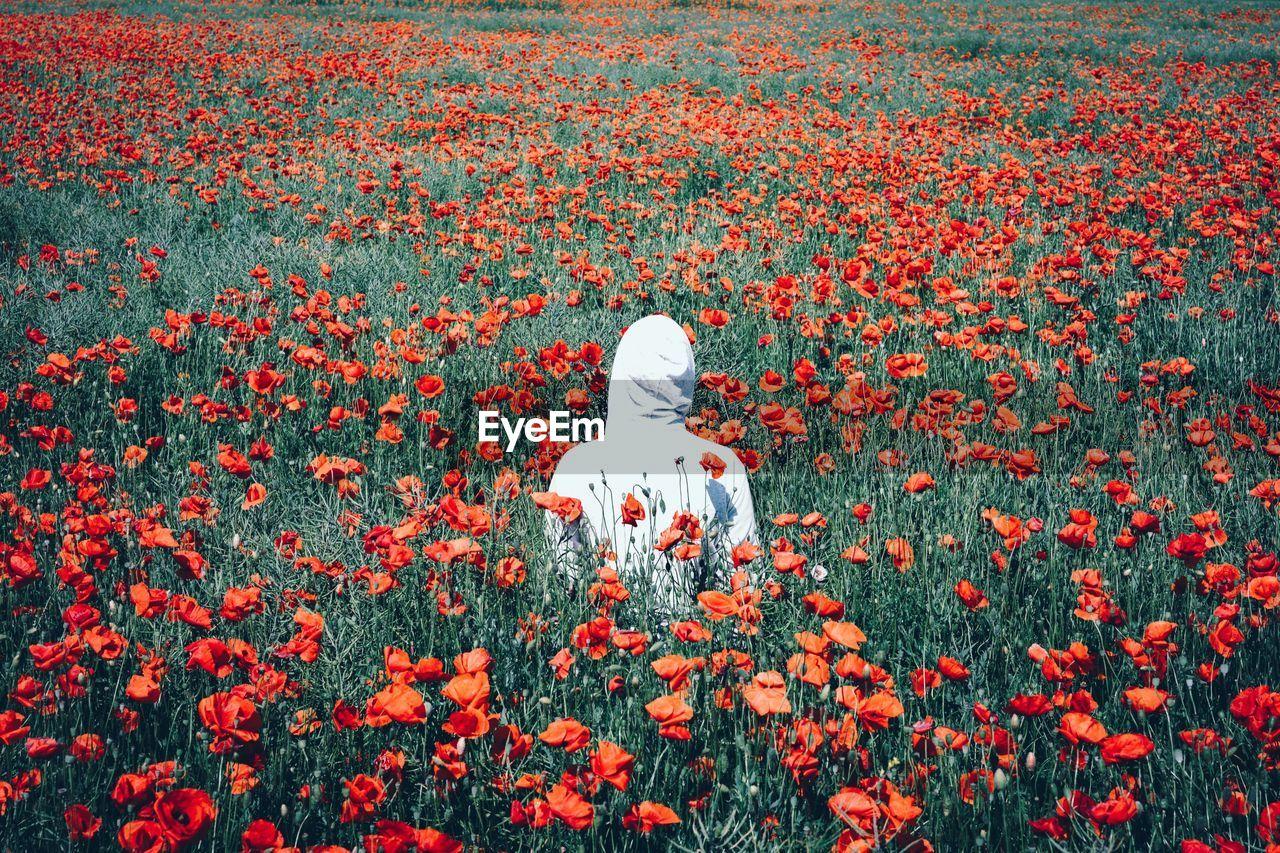 Rear View Of Person Amidst Poppy Flower Field