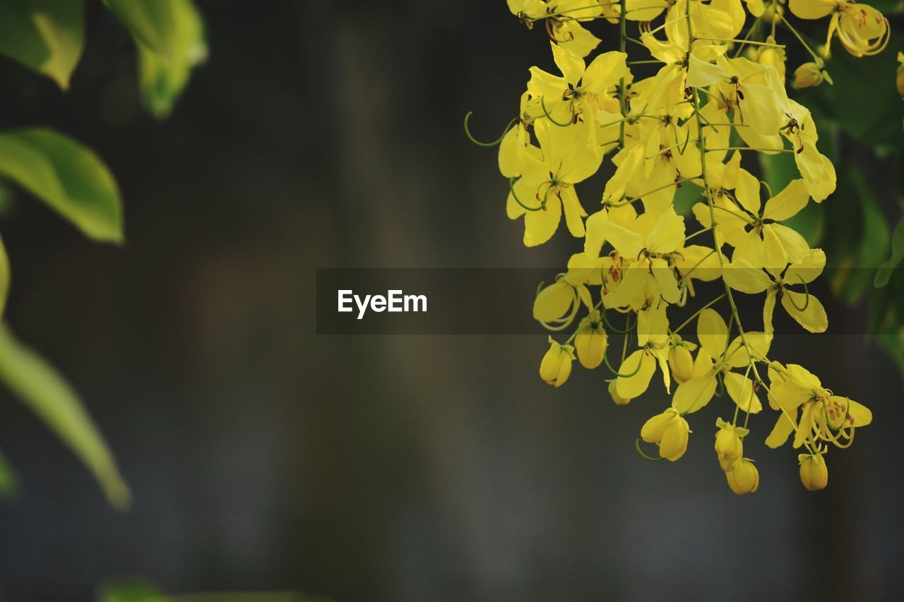 growth, beauty in nature, plant, focus on foreground, yellow, plant part, day, close-up, leaf, no people, nature, outdoors, fragility, flower, vulnerability, flowering plant, selective focus, freshness, tranquility, tree, flower head