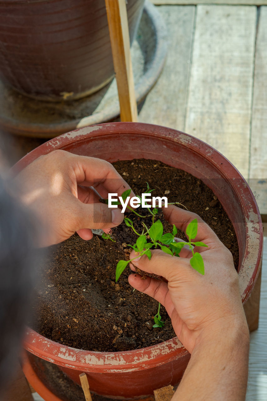 MIDSECTION OF WOMAN HOLDING POTTED PLANT IN POT
