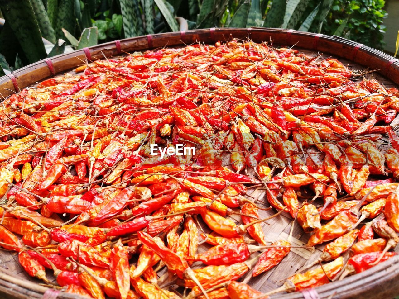 seafood, food and drink, food, no people, red, high angle view, animal themes, outdoors, day, prawn, large group of animals, close-up, large group of objects, freshness, healthy eating, nature