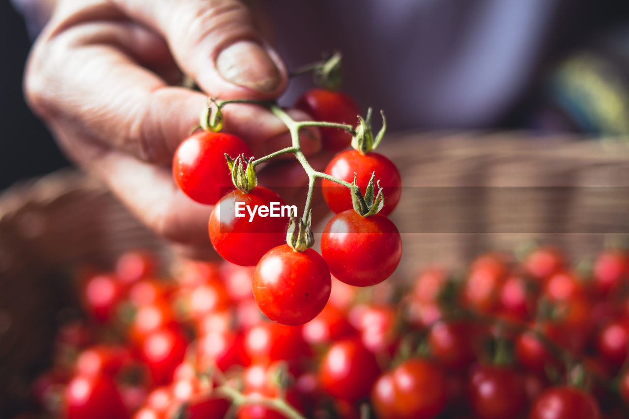 red, fruit, food, freshness, food and drink, healthy eating, human hand, hand, wellbeing, one person, close-up, focus on foreground, human body part, vegetable, day, holding, tomato, selective focus, real people, plant, ripe, finger, rowanberry