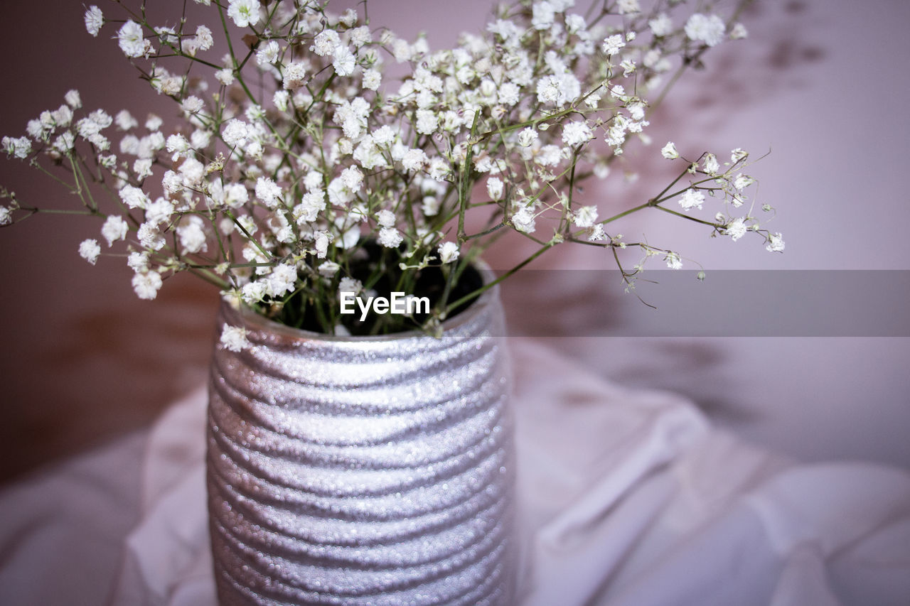 CLOSE-UP OF FRESH WHITE FLOWERS IN VASE ON PLANT
