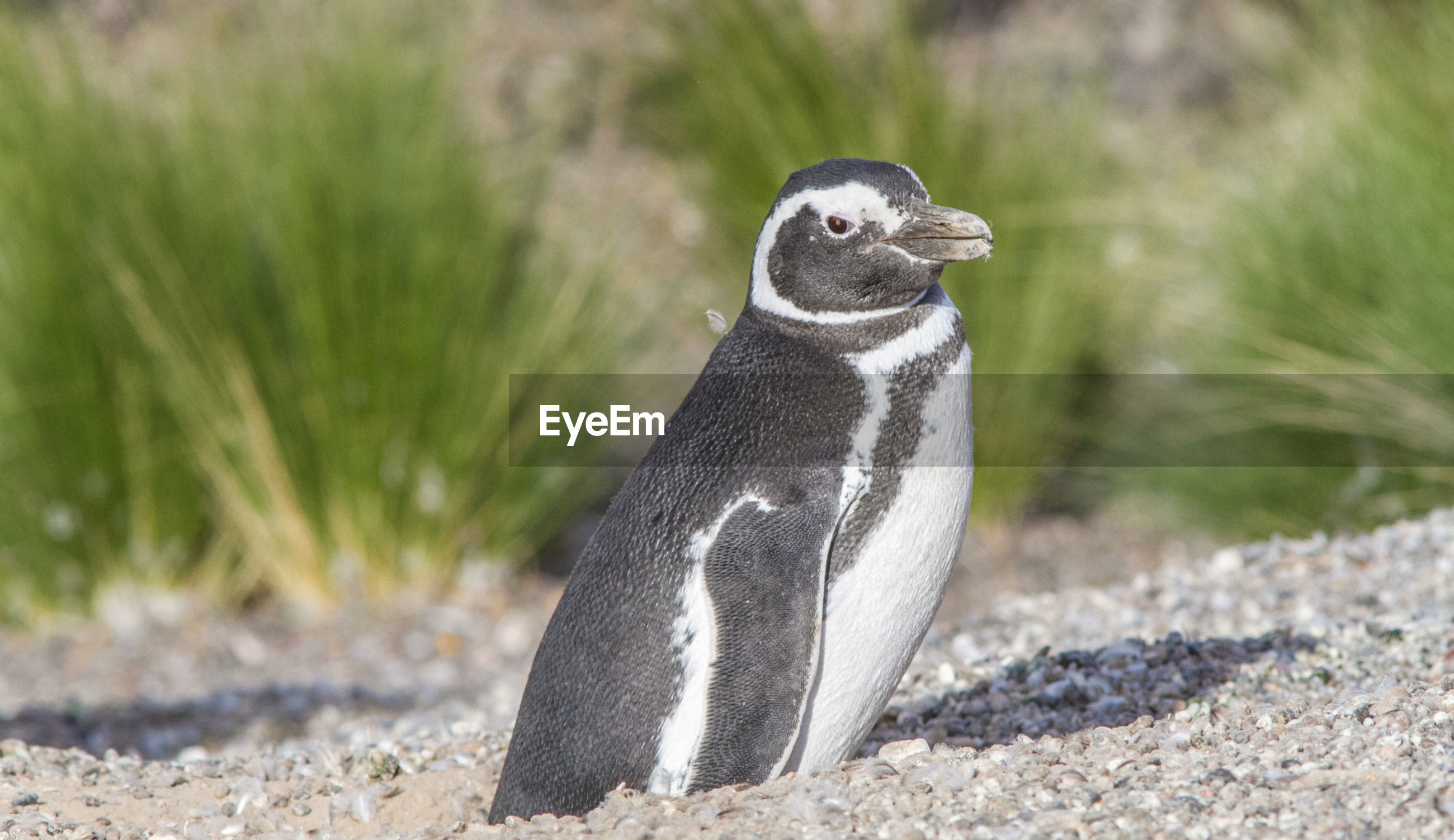 Side view of penguin at beach on sunny day