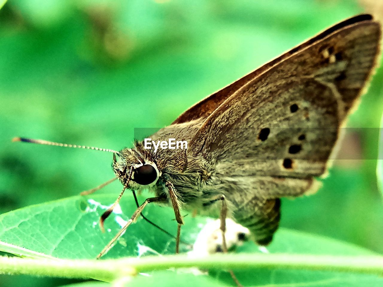 invertebrate, insect, one animal, animal themes, animals in the wild, animal, animal wildlife, close-up, plant part, animal wing, leaf, nature, no people, selective focus, green color, day, plant, beauty in nature, focus on foreground, animal body part, butterfly - insect, butterfly, animal eye