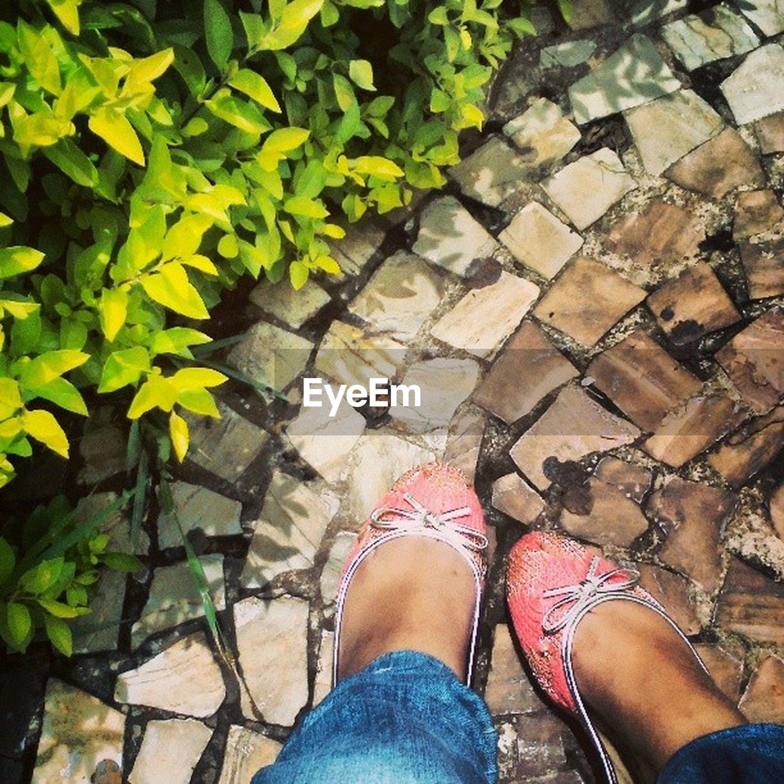 low section, person, personal perspective, shoe, lifestyles, high angle view, standing, human foot, leisure activity, men, unrecognizable person, leaf, outdoors, footpath, day, footwear
