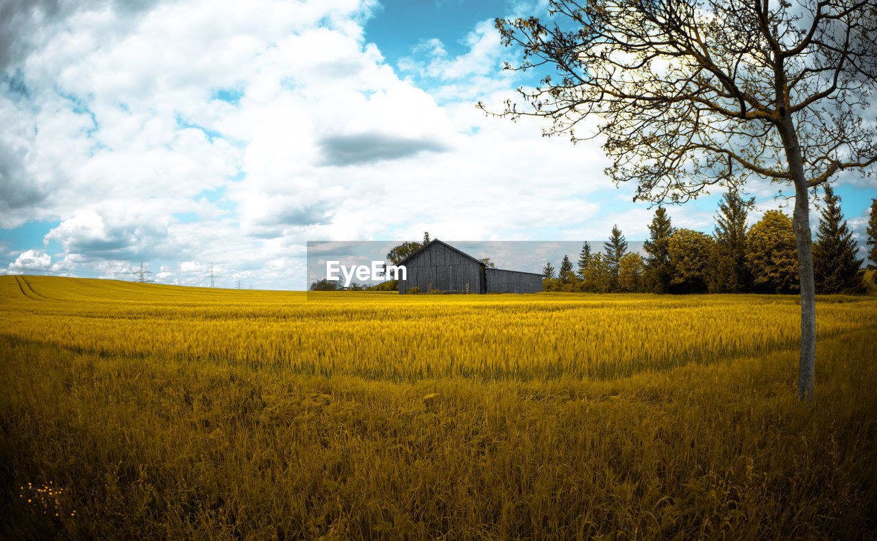 plant, field, sky, landscape, land, cloud - sky, built structure, architecture, environment, agriculture, growth, tranquility, beauty in nature, farm, rural scene, tranquil scene, building exterior, nature, building, tree, no people, outdoors
