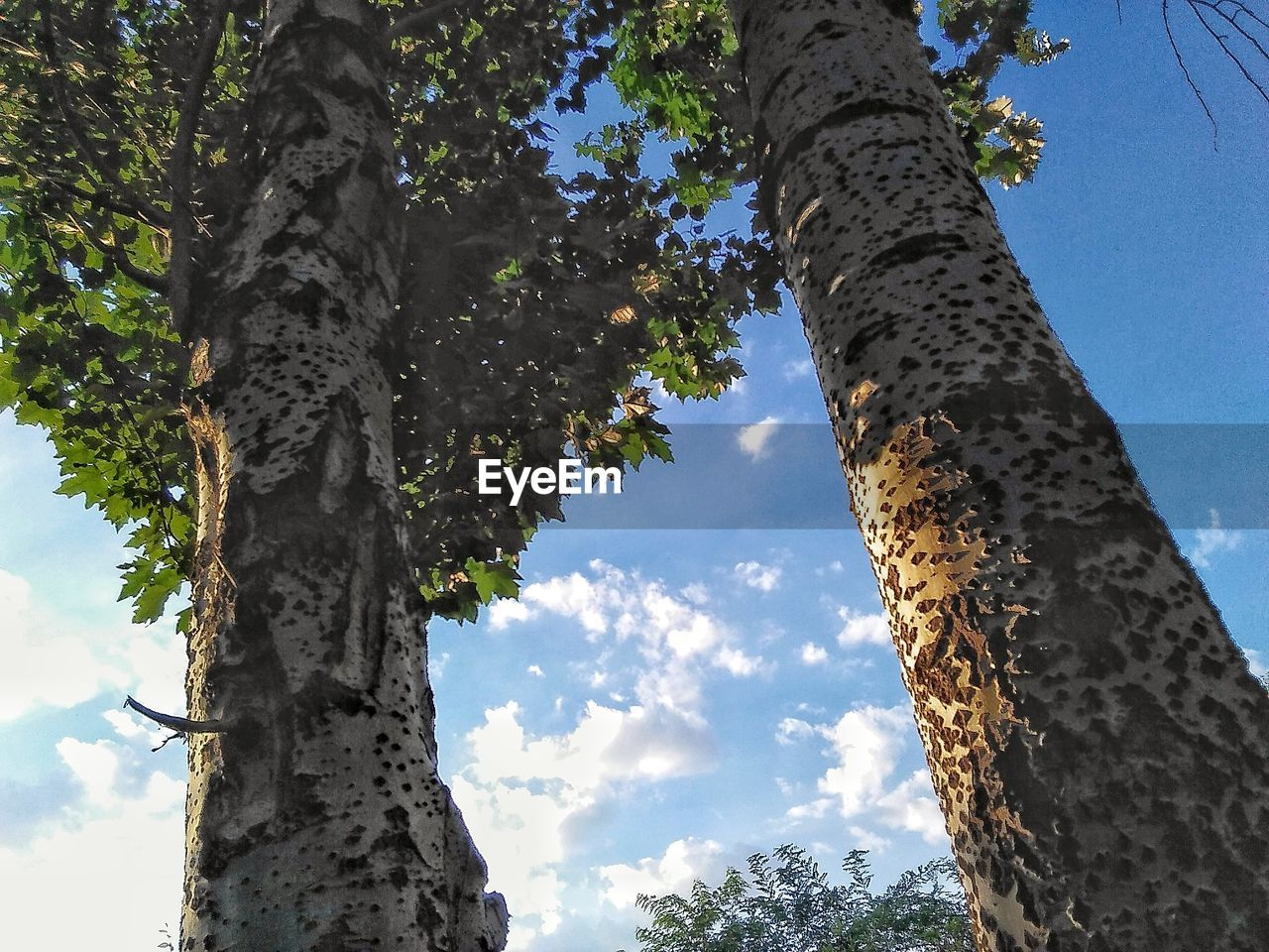 tree, tree trunk, low angle view, day, nature, growth, outdoors, sky, no people, forest, beauty in nature