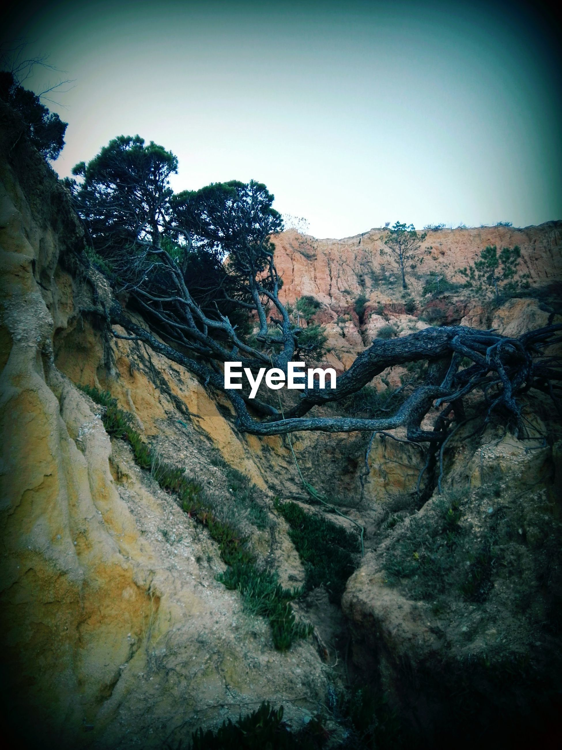 low angle view, clear sky, tree, nature, tranquility, rock formation, beauty in nature, rock - object, tranquil scene, scenics, textured, growth, branch, sky, auto post production filter, rough, sunlight, day, geology, outdoors