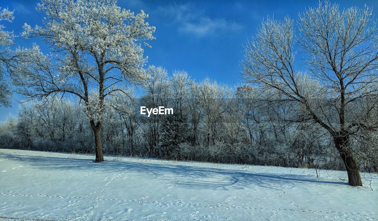 tree, cold temperature, snow, plant, winter, sky, nature, no people, bare tree, beauty in nature, blue, tranquility, day, tranquil scene, scenics - nature, cloud - sky, growth, covering, road, outdoors, treelined